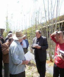 קבוצת חקלאים פלסטינאים מטובס מקבלים הסבר על המורינגה